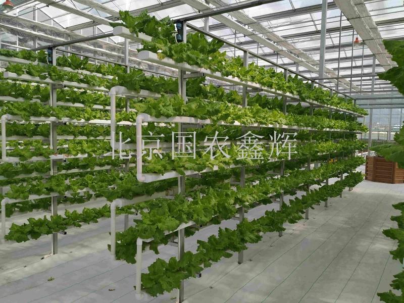 甘肃陇南市武都区东西部协作智能温室立体栽培项目