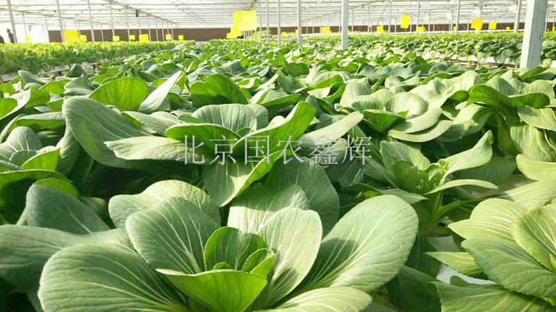 湖南新泰和绿色蔬菜基地叶菜水培项目