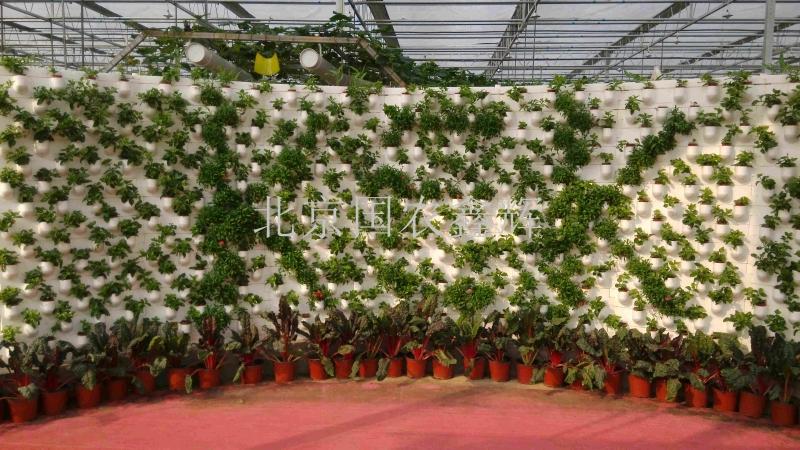 湖南长沙市柯柯现代农业观光温室