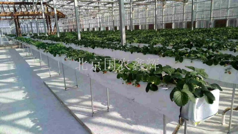 江西上饶云谷田园智能温室生产型蔬菜无土栽培