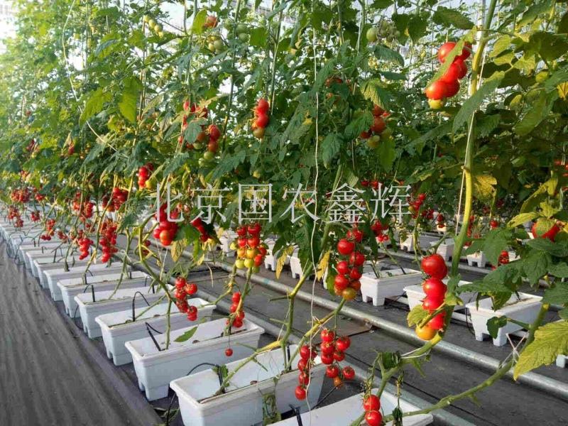 新疆塔城建设兵团9师生产型无土栽培项目