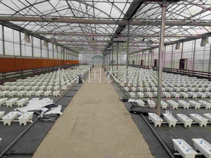 中国人民解放军总后勤部副食品基地蔬菜无土栽培项目