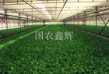 浮板水培栽培