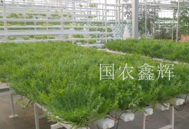 平铺管道栽培